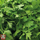Thompson & Morgan Herb Parsley Flat Leaved (Organic)