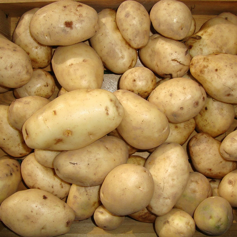 Seed Potatoes Majestic 2kg