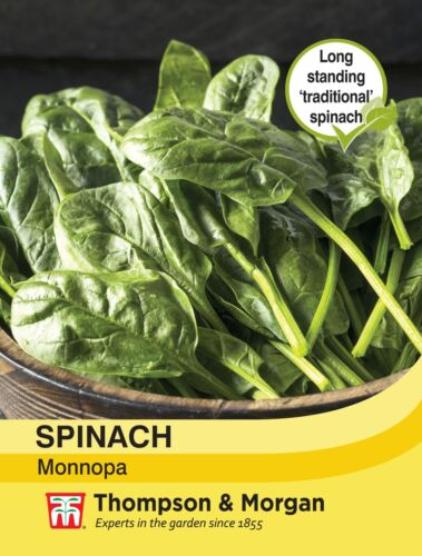 Spinach Monnopa Seeds