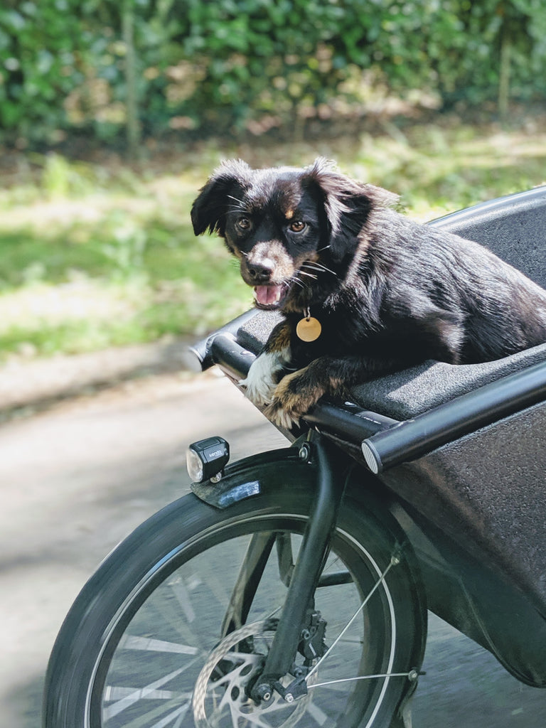 Sustainable Family hond in de bakfiets