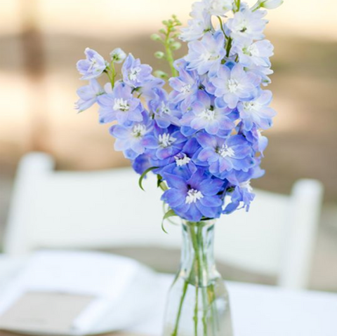 Blue Delphiniums in a narrow clear glass vase.