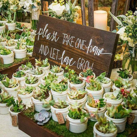 Pots of succulents to give away at your wedding