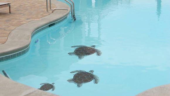 Loggerhead Turtle Family