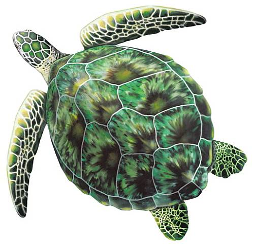 #5100 Green Sea Turtle