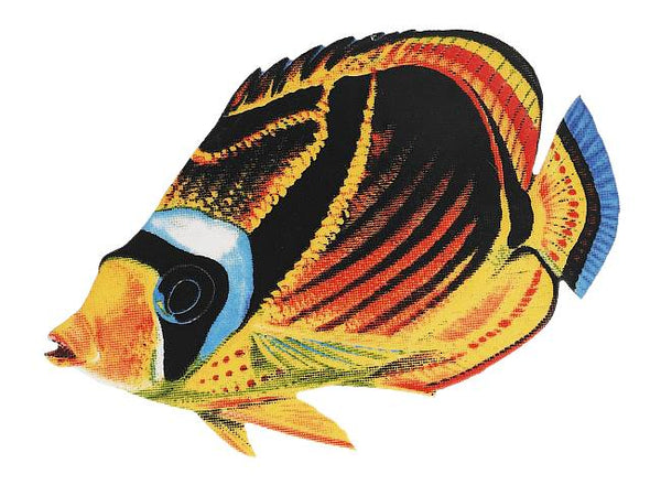 #3383 Raccoon Butterfly Fish Small