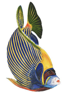 Emperor Angelfish Swimming Pool Mosaic Tile | Emperor Angelfish Pool Tile