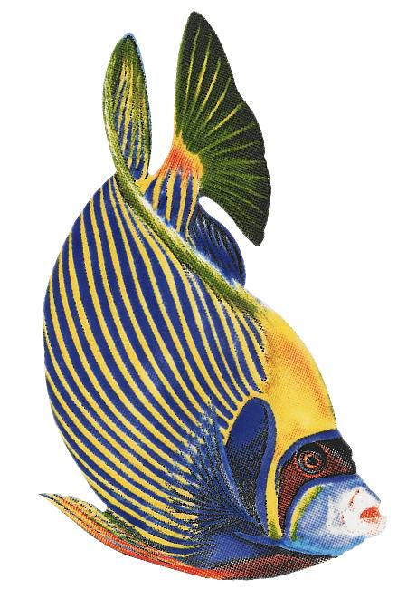 Emperor Angelfish Swimming Pool Mosaic Tile