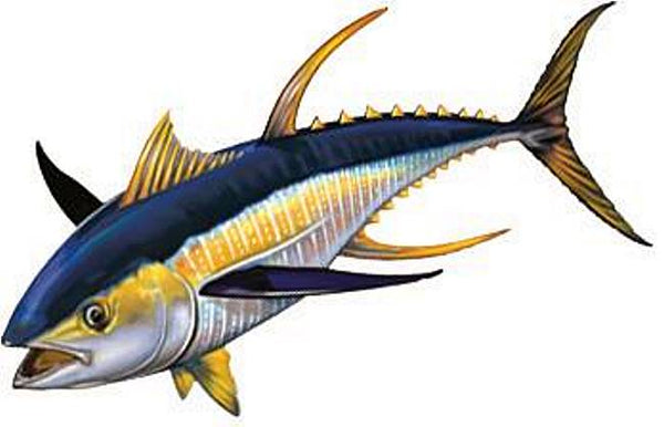 Yellowfin Tuna Left - Two Sizes and Shadow