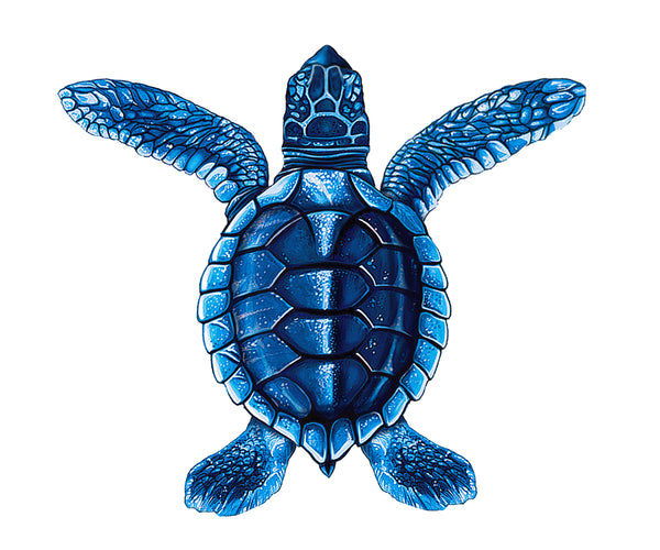 #3255 Turtle A - 5""