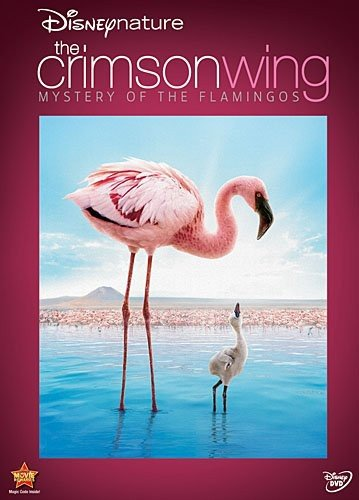 Disneynature The Crimson Wing Mystery Of Flamingos