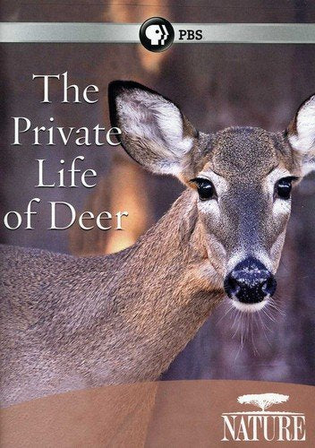 Nature Private Life Of Deer