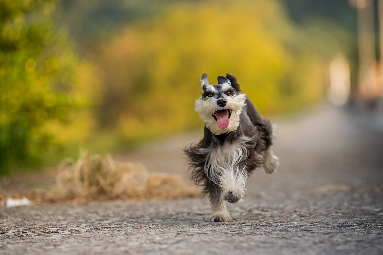 Does Your Dog Walk Like This? If So, Something Is Wrong!