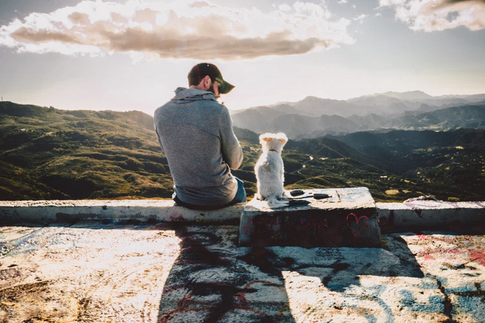 Man sitting with white dog at sunset