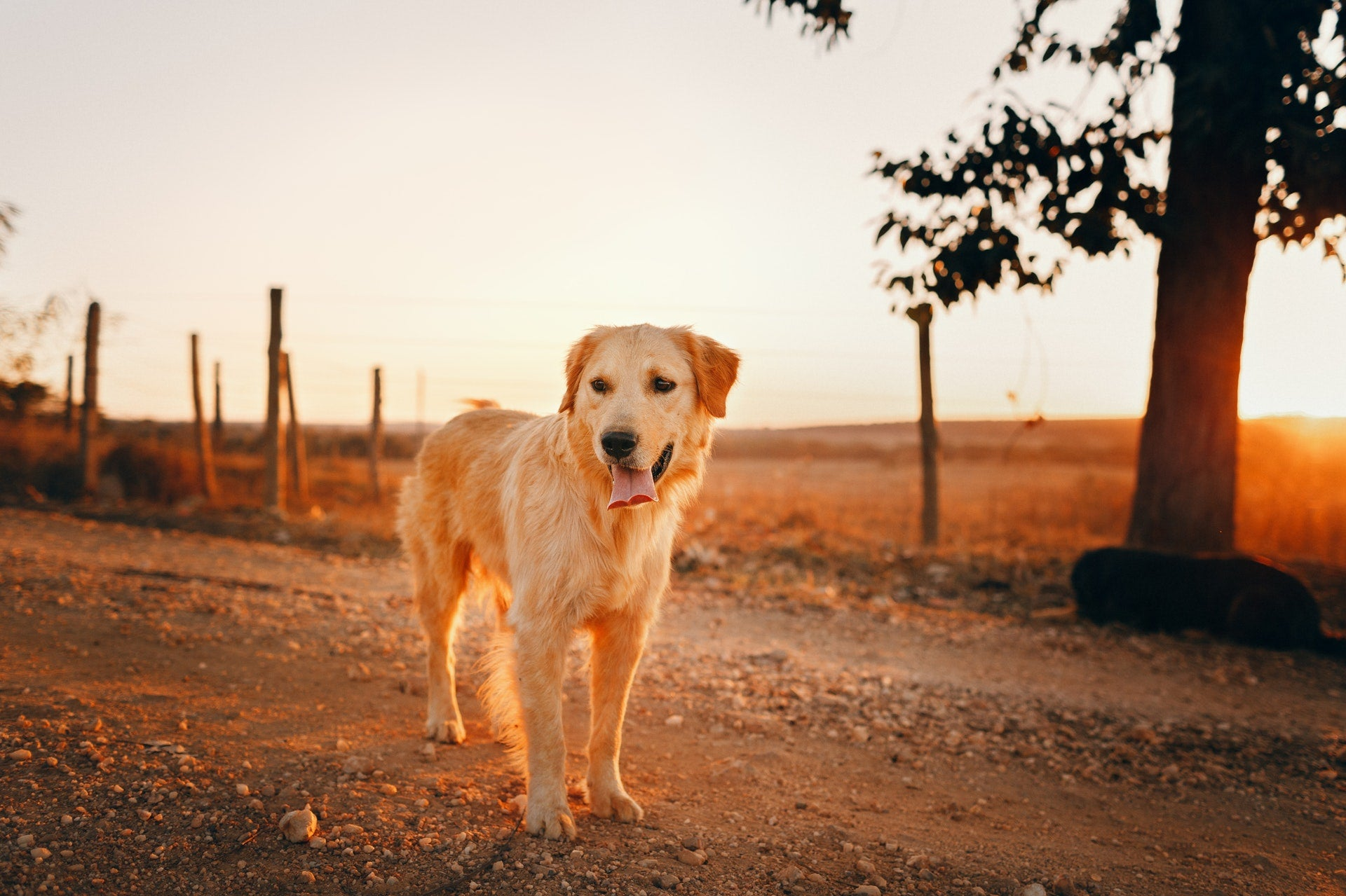 8 Natural Remedies For Joint Pain In Dogs