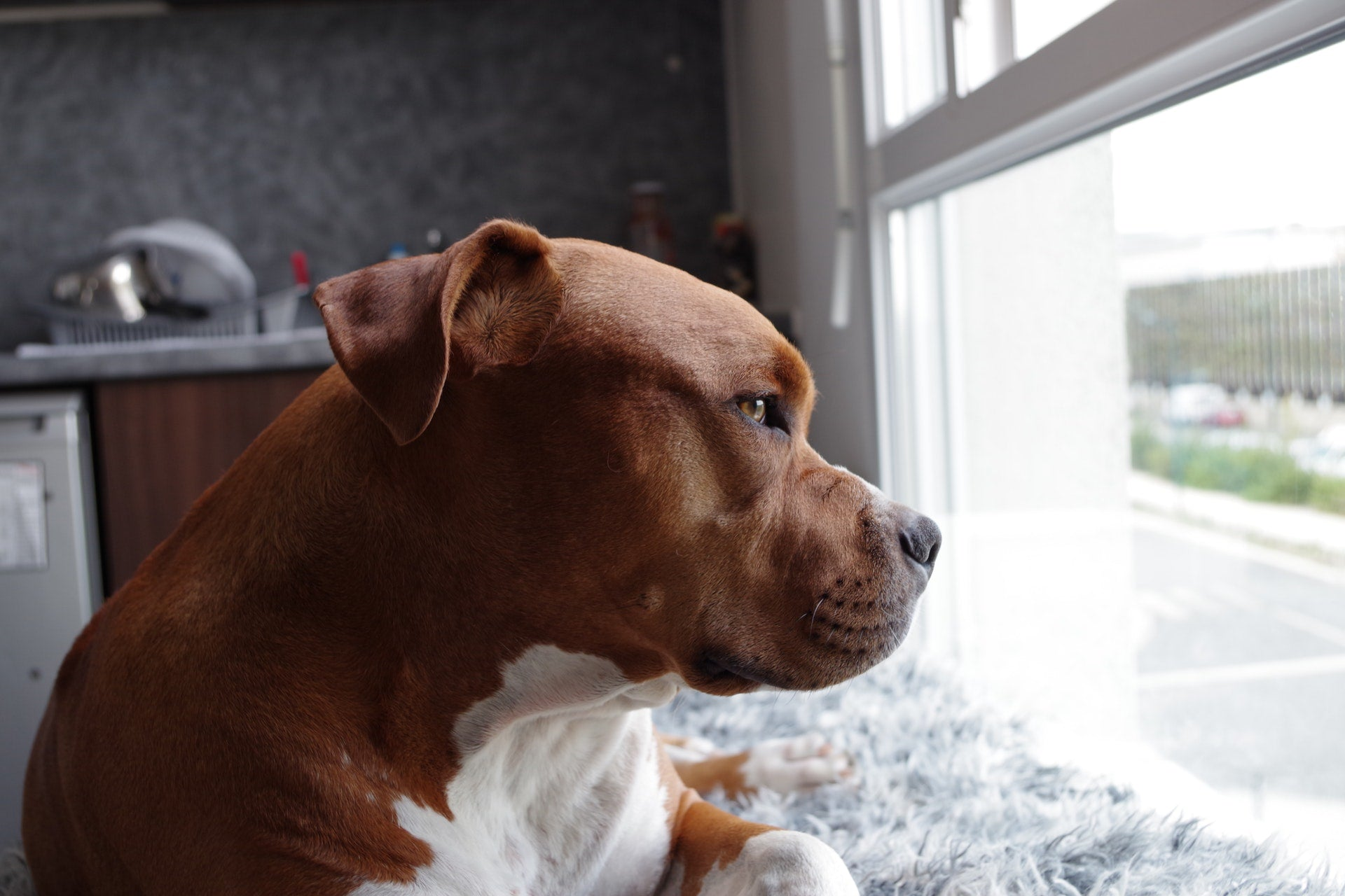 Dog Separation Anxiety Help: 6 Comforting Steps