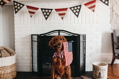 7 Tips To Calm Your Dog This 4th Of July
