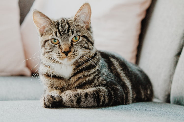 Diabetes In Cats: Symptoms, Prevention and Treatment