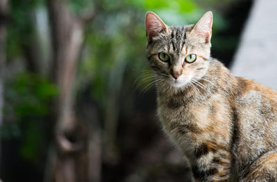 Cat UTI: Everything You Need To Know!