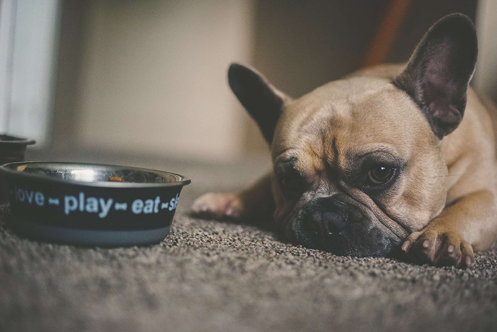 Dog Eating Disorders: Does Your Dog Have One?