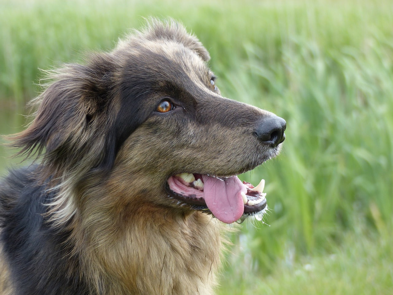 Gum Disease In Dogs: 4 Ways To Prevent It