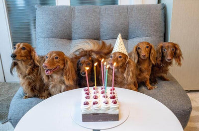 How to Make the Perfect Birthday Cake for Your Dog!