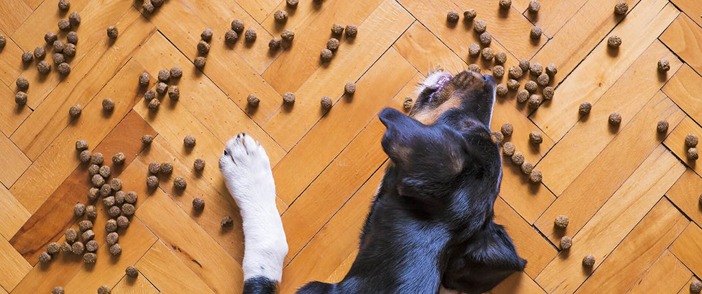 Your Guide To Storing Dog Food