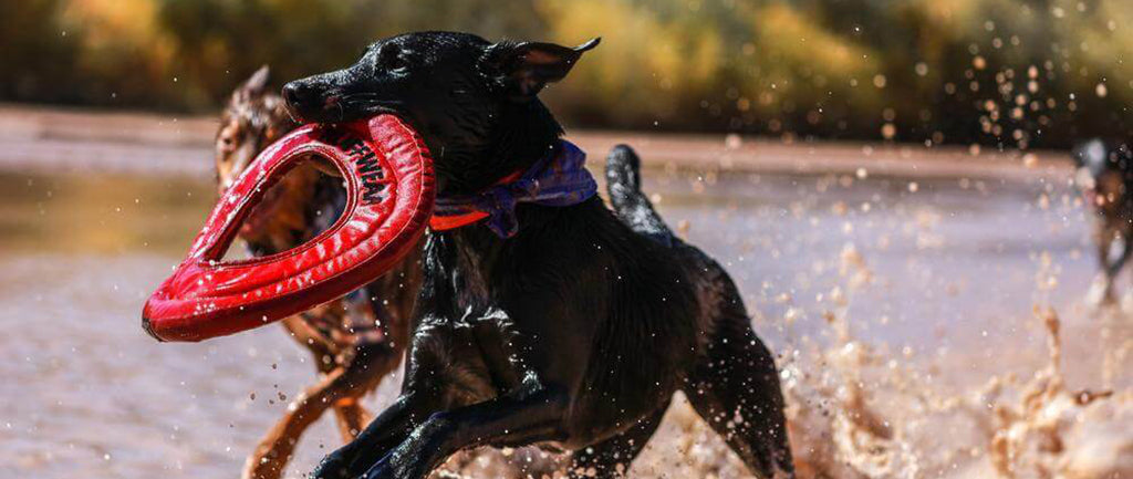Choosing The Right Types Of Toys For Your Dog
