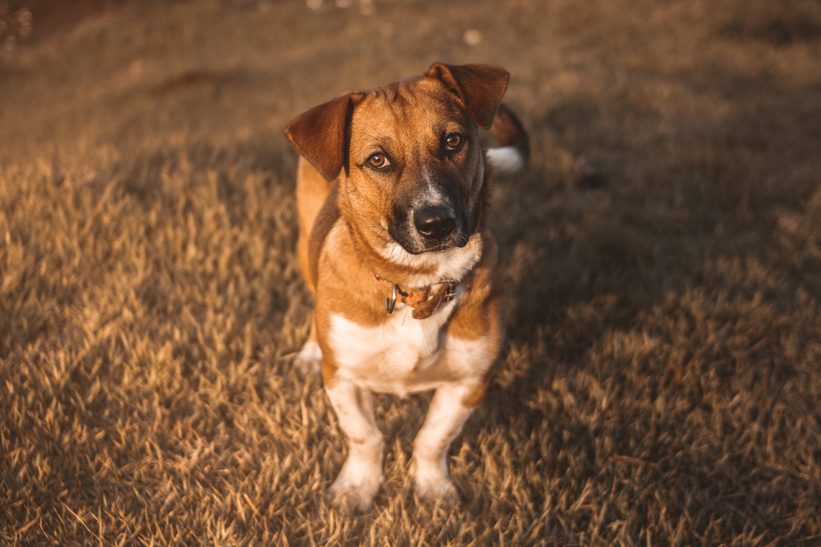 Checking Your Dog's Poop Could Save Their Life!