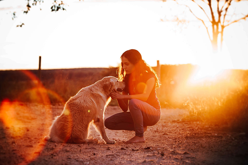 owner and dog at sunset