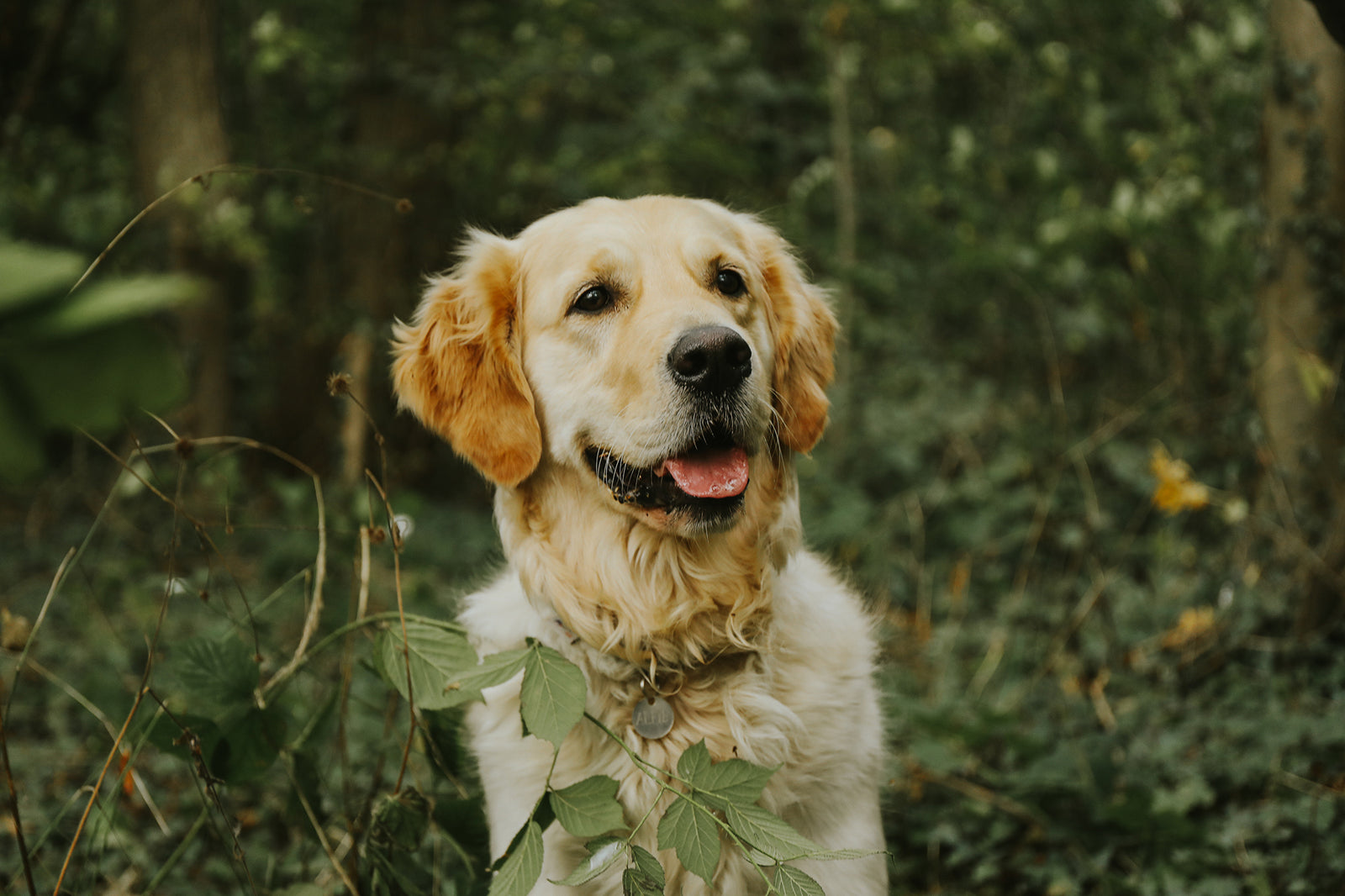 What Is MSM & Does Your Dog Need It? - Petlab Co