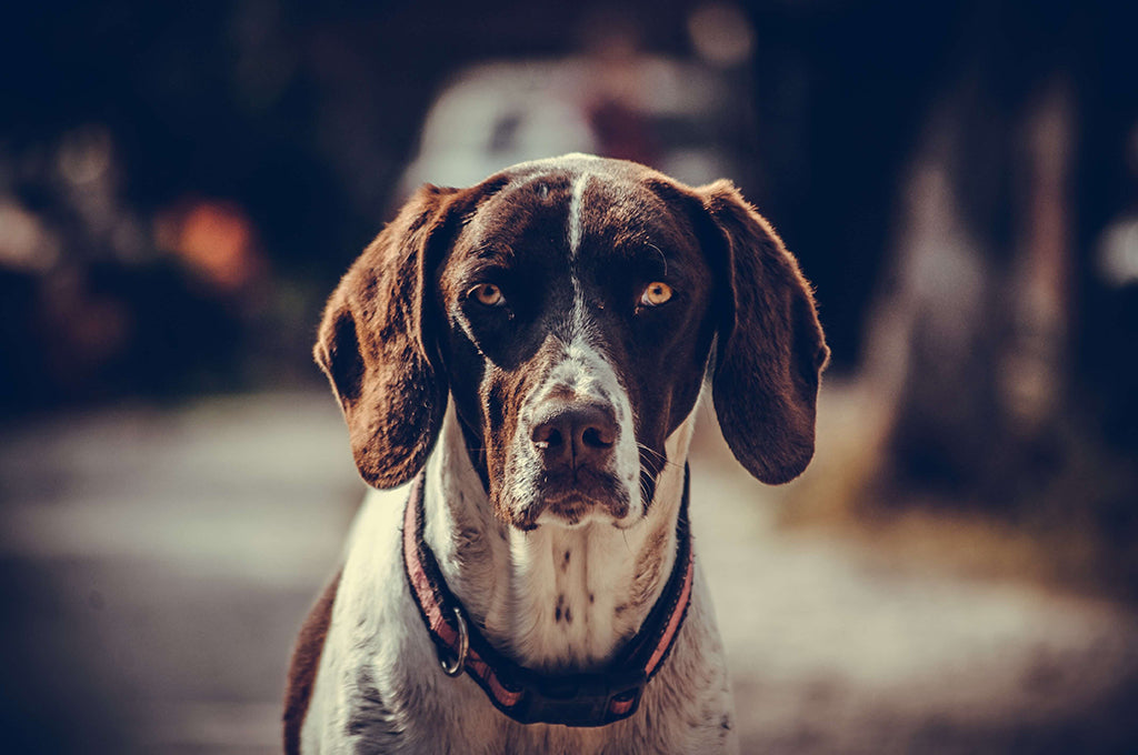 What Causes Inflamed Intestines In Dogs?
