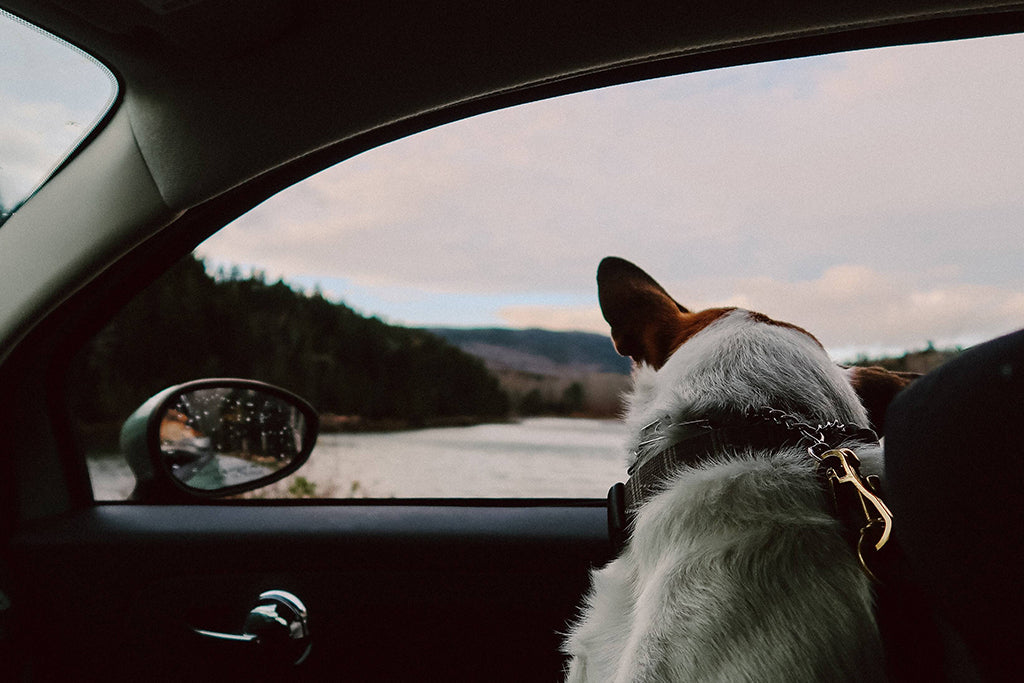 Dog Car Safety: What You Need To Know