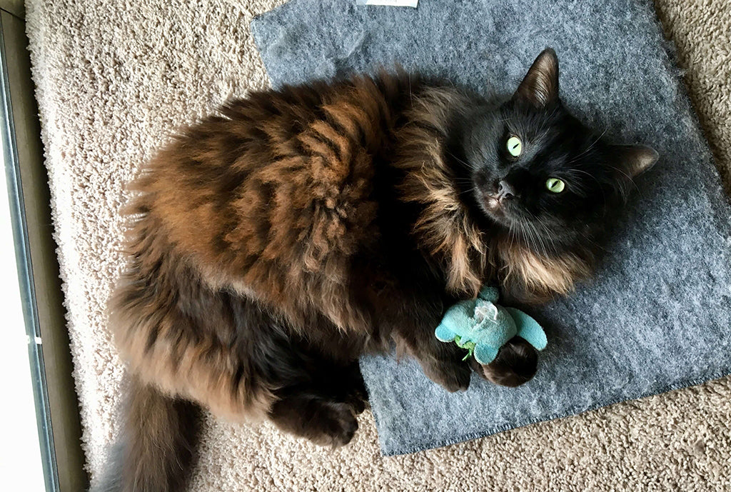 fluffy cat with toy