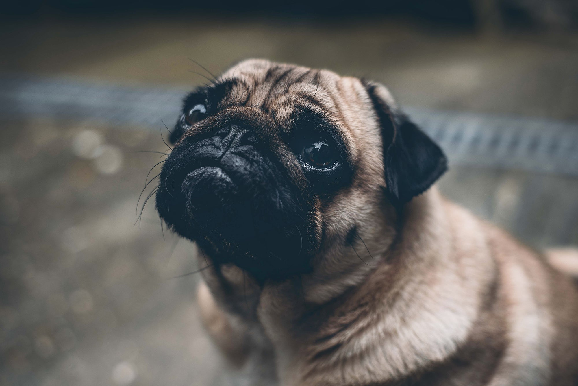"""7 """"Deadly"""" Warning Signs Of Heart Problems In Dogs"""