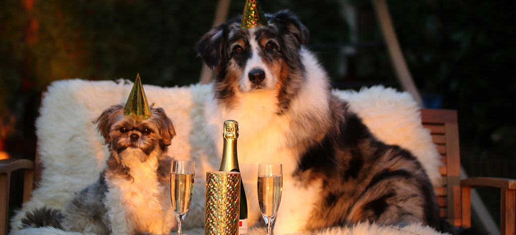 How To Calm Dog's From Fireworks This New Year's Eve