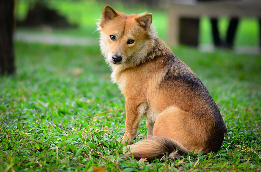 Dog Pee Turning Lawn Brown? Here's What To Do