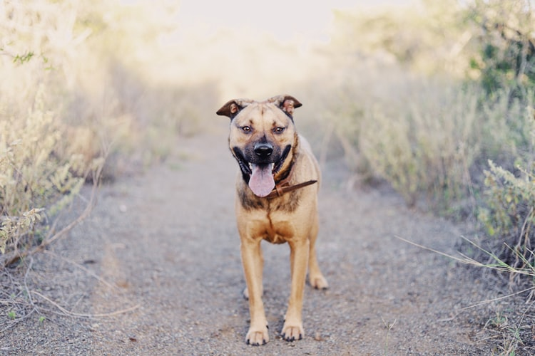 Resveratrol For Dogs: What Are The Benefits?