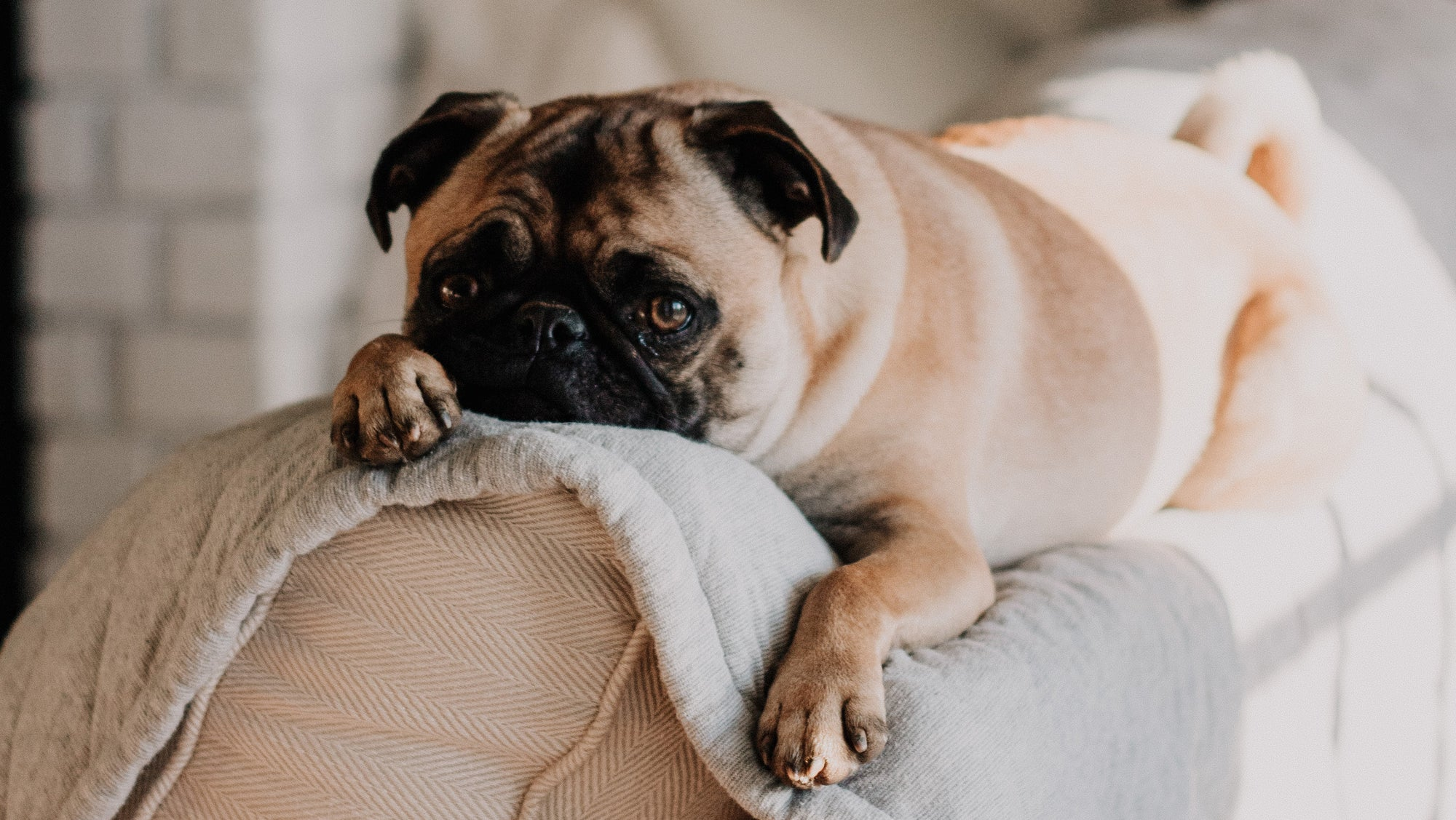 5 Simple Ways to Calm Your Anxious Dog