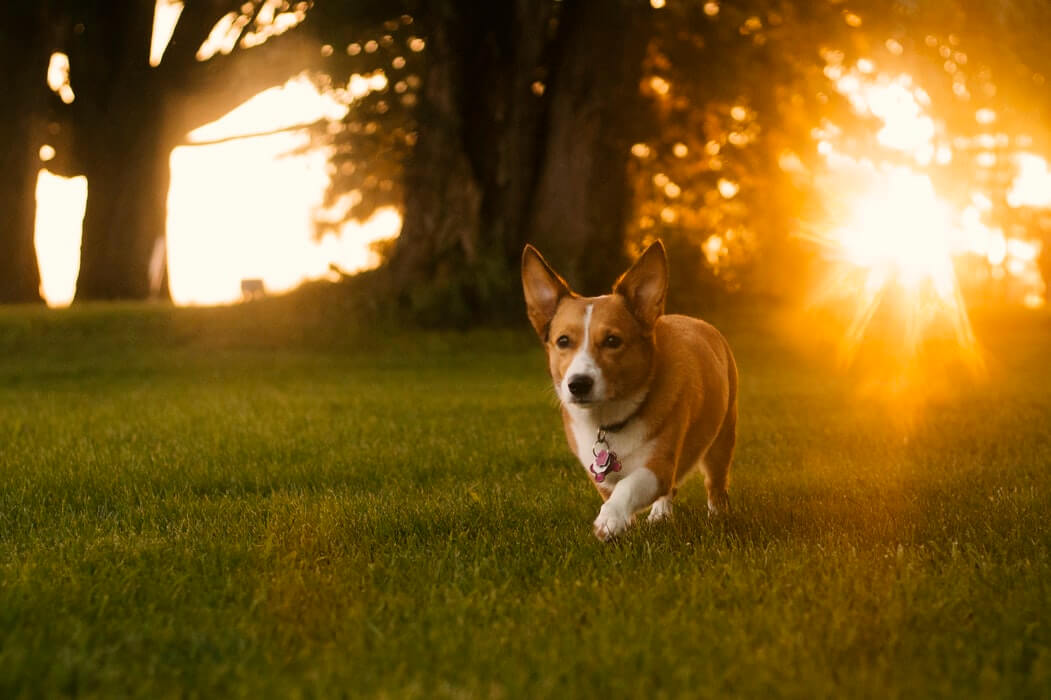6 Ways To Help Your Dog Avoid Springtime Allergies