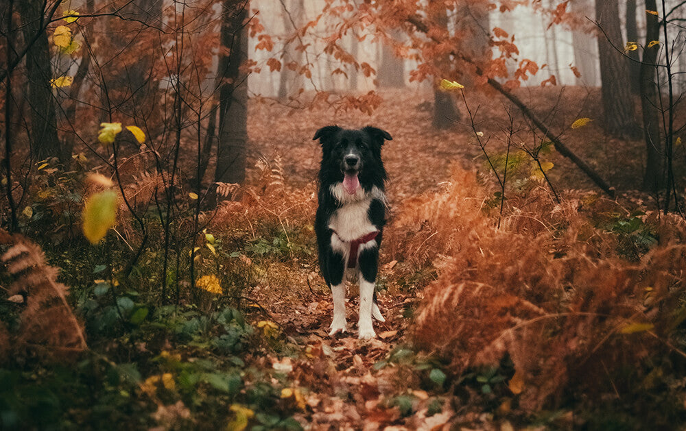 black and white dog in forest