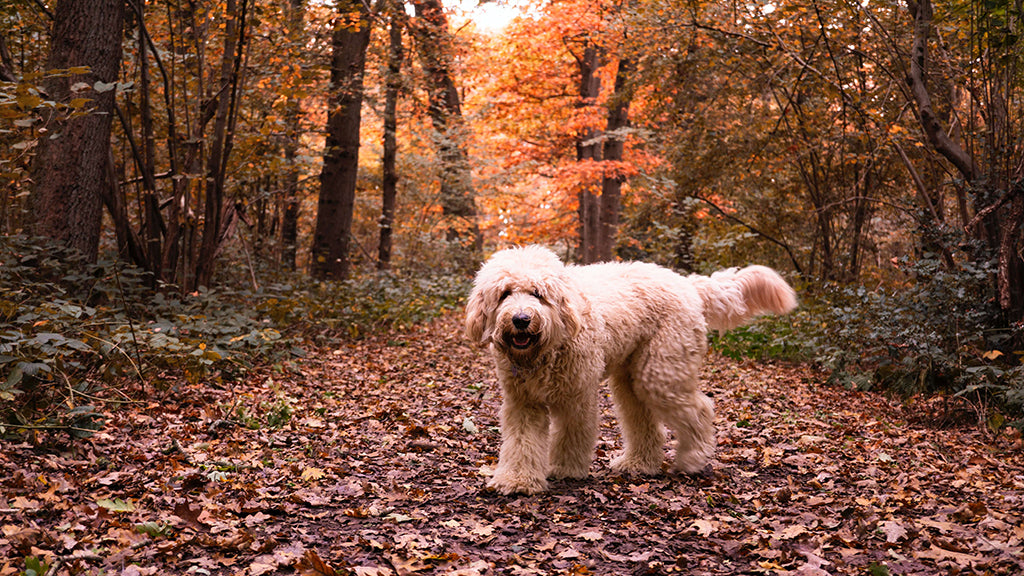 Fluffy dog in fallen leaves
