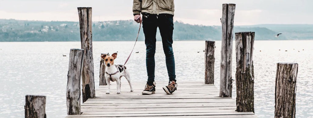 Human and dog standing on dock by water