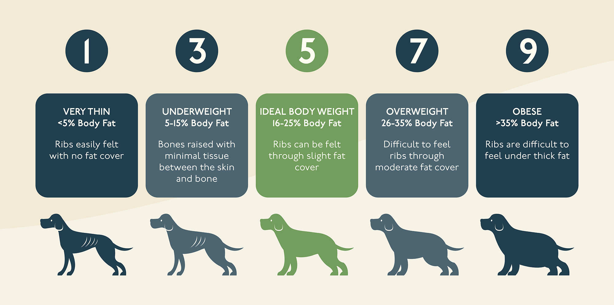 Petlab Co dog weight guide
