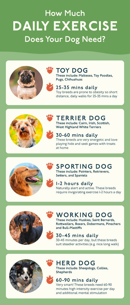 Petlab Co. exercise guide