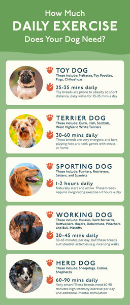 How Much Should You Exercise Your Dog?