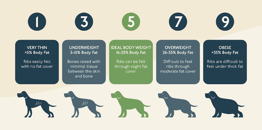 Healthy weight chart for dogs