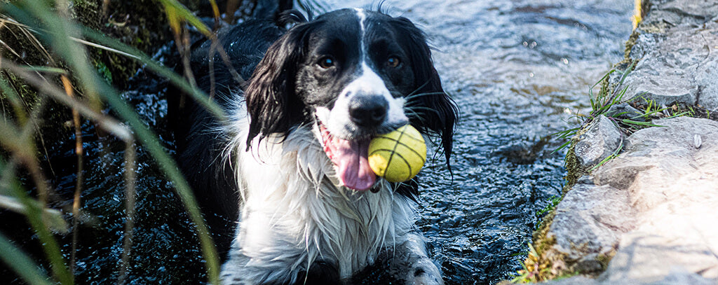 dog with ball in lake