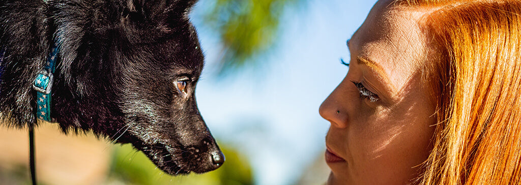 black dog gazing woman eyes