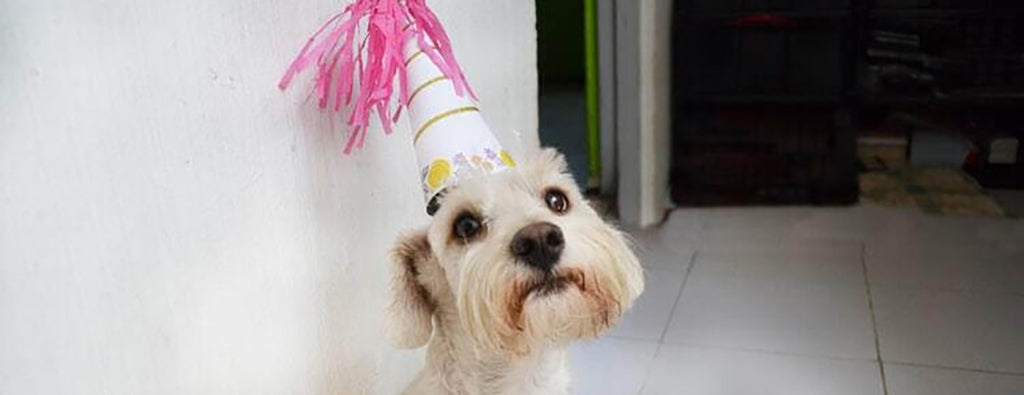 White dog in party hat