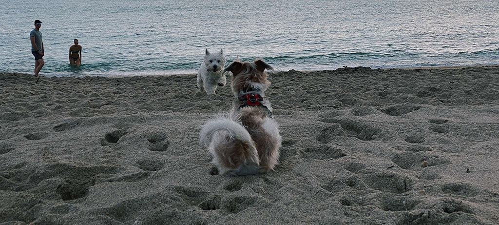 small dogs on the beach